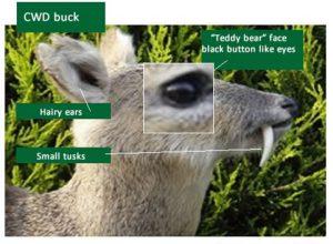 DSCTraining.org Deer ID Slide